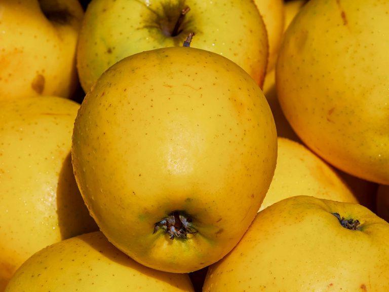 Tout savoir sur la pomme Golden | Potager City
